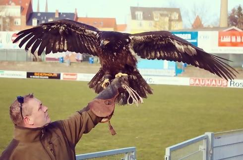 FC Roskilde hyrer stadion-ørn