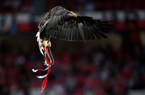 Otte forskellige målscorere i Benficas 10-0-sejr